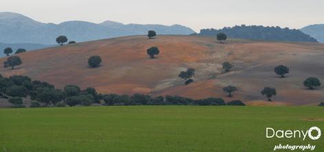 Landscape, Andalucía