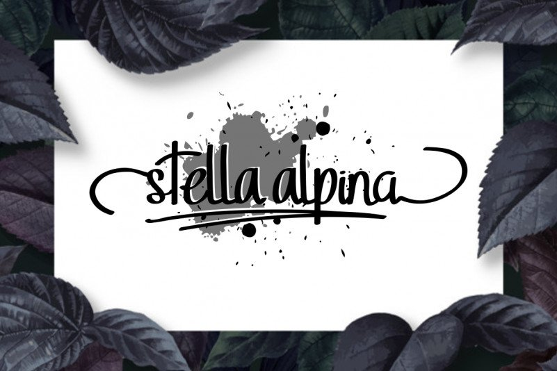 sidiq_stella-alpina_cover-font2-1200x800