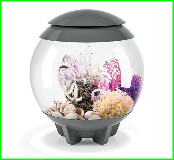 Nyari Aquarium Ikan Cupang Keren Ini Rekomendasi Terbaik Daftarhewan Com