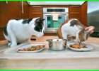 bagaimana cara memberi makan kucing, cara memberi jadwal makan kucing, cara memberi makanan kucing persia, cara memberi makan pada kucing sakit, cara memberi makan kucing agar gemuk, jam memberi makan kucing persia, cara memberi makan kucing liar, mimpi memberi makan kucing liar, kisah nyata memberi makan kucing, memberi makan pada kucing