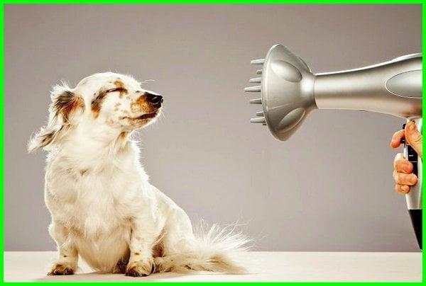 grooming hewan adalah, grooming hewan terdekat, grooming hewan jogja, grooming hewan bekasi, grooming hewan di makassar, grooming hewan kesayangan, grooming hewan di bekasi, grooming hewan shampoo, pelatihan grooming hewan, pengertian grooming pada hewan