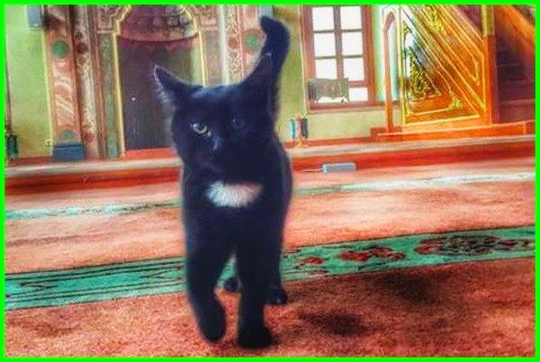 Mengenal Nama Kucing Nabi Muhammad Daftarhewan Com