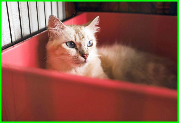 Daftar Nama Kucing Lucu Untuk Jantan Dan Betina Daftarhewan Com