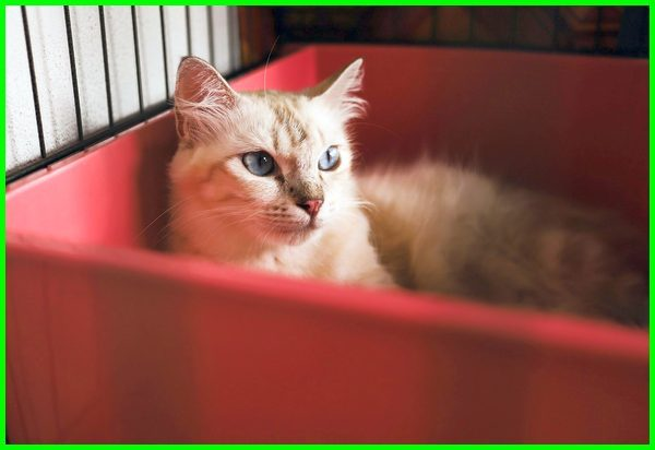 nama kucing lucu betina, nama kucing lucu betina dan artinya, nama kucing lucu betina dan jantan, nama kucing lucu inggris, nama kucing betina lucu indonesia, nama kucing lucu jantan dan betina, nama kucing betina lucu korea, nama kucing betina lucu dan artinya, nama lucu kucing persia betina, nama kucing lucu singkat, saran nama kucing lucu, nama lucu untuk kucing siam, nama kucing siam yang lucu, nama nama kucing lucu jantan, nama kucing lucu untuk jantan, nama kucing lucu untuk perempuan