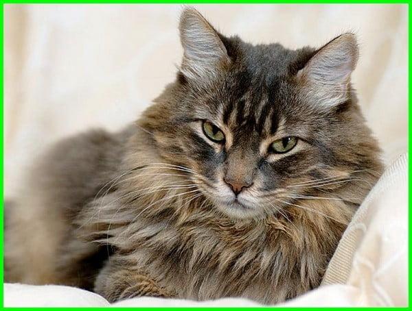 nama kucing jantan lucu dan artinya, nama kucing jantan lucu unik, nama2 kucing jantan lucu, nama kucing lucu laki laki, nama lucu untuk kucing laki laki, nama kucing laki2 yg lucu, nama kucing laki2 yang lucu, nama kucing laki yang lucu, nama kucing laki yg lucu, nama lucu kucing persia jantan, nama kucing lucu laki2, nama nama kucing lucu jantan, nama kucing lucu untuk jantan, nama kucing yang lucu untuk jantan, nama kucing yang lucu jantan, nama kucing lucu laki