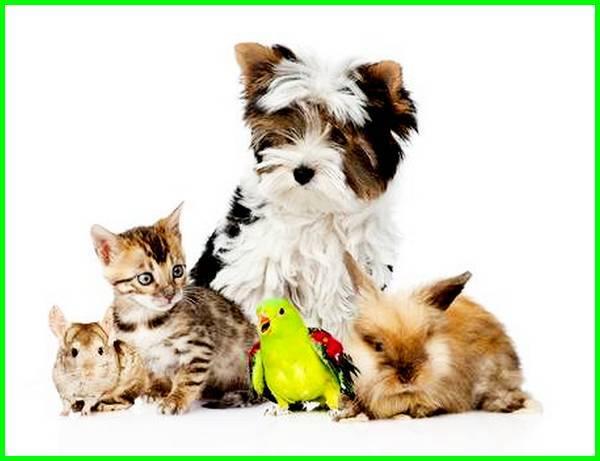 aturan hewan peliharaan yang kamu ketahui, peraturan hewan peliharaan, aturan merawat hewan peliharaan, aturan merawat hewan peliharaan yang kamu ketahui, aturan merawat hewan peliharaan kelas 1, aturan memelihara hewan peliharaan, aturan merawat hewan peliharaan di rumah, aturan merawat hewan peliharaan adalah, aturan merawat hewan peliharaan ayam, aturan merawat hewan peliharaan anjing, contoh aturan merawat hewan peliharaan adalah