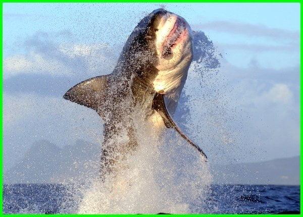 hewan paling ganas di laut, hewan laut paling ganas, hewan paling buas di laut, hewan laut paling ganas di dunia