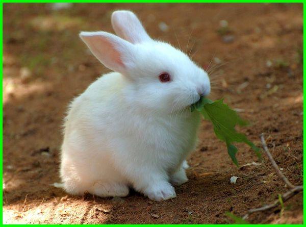 kelinci lucu imut, kelinci lucu dan imut, kelinci lucu sekali, kelinci lucu sedunia, kelinci lucu di dunia, kelinci lucu banget, kelinci lucu anak, gambar kelinci anggora lucu, foto kelinci anggora lucu, kelinci yang lucu banget, gambar kelinci lucu dan cantik, foto kelinci lucu dan cantik