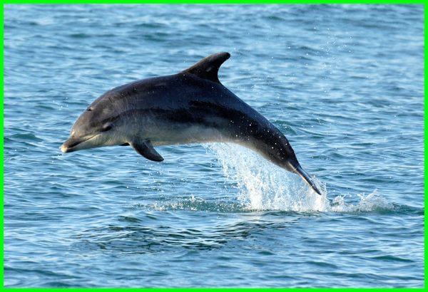 binatang apa saja yang hidup di air, hewan apa saja yang hidup di air, nama hewan yang hidup di air, hewan apa yang hidup di air, apa saja hewan yang hidup di air, binatang apa yang hidup di air, hewan yang hidup di air asin, hewan yang hidup di air dan darat, hewan yang hidup di air selain ikan, hewan yang hidup di air laut