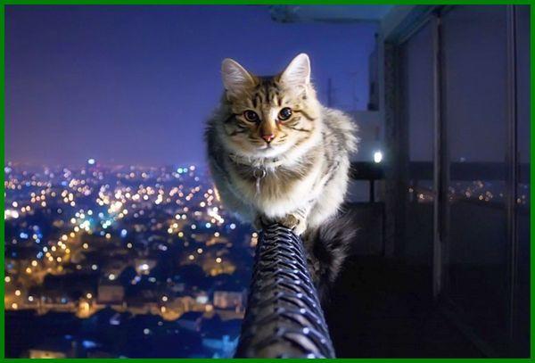 cari nama kucing cowok, nama kucing laki laki yg bagus, nama kucing laki laki berdasarkan warna, nama kucing laki-laki yang bagus, nama kucing laki laki yang bagus, nama kucing keren cowok, nama kucing cowok putih, nama kucing jantan terbaik, nama kucing jantan keren, nama2 kucing cowok, nama nama kucing laki laki, nama-nama kucing laki-laki, nama kucing laki laki keren