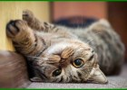nama kucing jantan korea, nama kucing jantan korea dan artinya, nama2 kucing jantan korea, nama nama kucing jantan korea, nama kucing jantan di korea, nama korea untuk kucing jantan, nama kucing jantan bahasa korea, nama kucing laki laki korea, nama kucing jantan lucu korea, nama kucing korea jantan, nama kucing jantan di korea, nama kucing jantan korea, nama korea untuk kucing jantan, nama nama kucing jantan korea