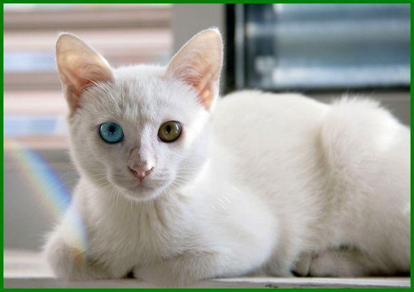 Daftar 21 Nama Kucing Jantan Islami Terbaik Daftarhewan Com