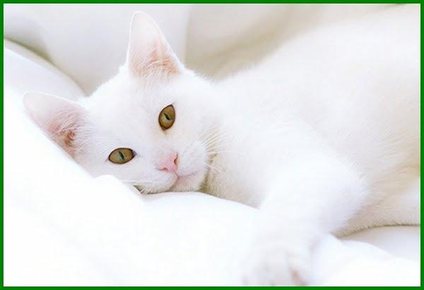 Intip Yuk Nama Kucing Korea Yang Bagus Daftarhewan Com
