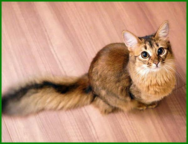 Daftar Terbaru 27 Nama Kucing Betina Islami Terbaik Daftarhewan Com