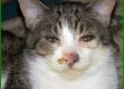 cara kucing pilek, cara mengobati kucing flu, cara menyembuhkan kucing flu, cara mengatasi kucing flu, cara mengobati kucing flu dengan bahan alami, cara mengobati kucing flu secara alami, cara mengobati kucing flu berat, cara merawat kucing flu, cara mengobati kucing flu alami, cara mengobati kucing pilek alami, cara mengobati kucing anggora flu, cara mengatasi kucing flu secara alami, cara menyembuhkan kucing flu secara alami, cara atasi kucing flu, cara mengobati kucing flu dengan alami