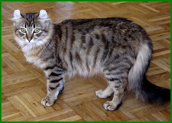 nama jenis kucing mahal, 10 jenis kucing mahal, jenis kucing yang paling mahal, jenis kucing ras mahal, jenis kucing termahal, ras kucing paling mahal, jenis kucing yg mahal, 3 jenis kucing, jenis2 kucing mahal