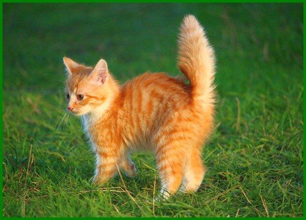 nama untuk kucing putih oren, nama sesuai untuk kucing oren, senarai nama kucing oren, nama kucing untuk warna oren, nama unik untuk kucing oren, nama kucing warna oren nama untuk kucing warna oren, nama sesuai untuk kucing warna oren, nama kucing oren yang bagus