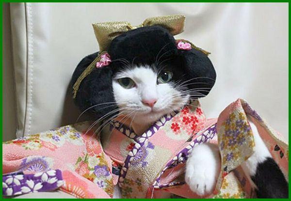 12 Rekomendasi Nama Kucing Betina Jepang Daftarhewan Com