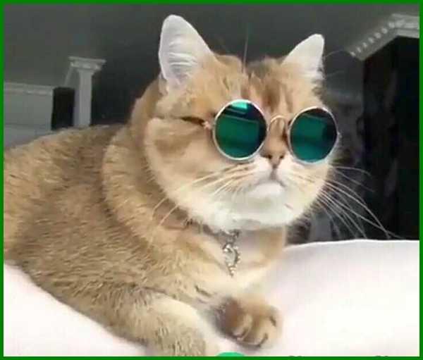 Nama Korea Untuk Kucing Betina Dan Artinya Daftarhewan Com