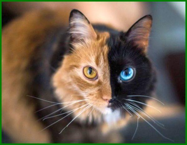 Nama Kucing Korea Jantan Yang Unik Dan Familiar Daftarhewan Com Daftarhewan Com