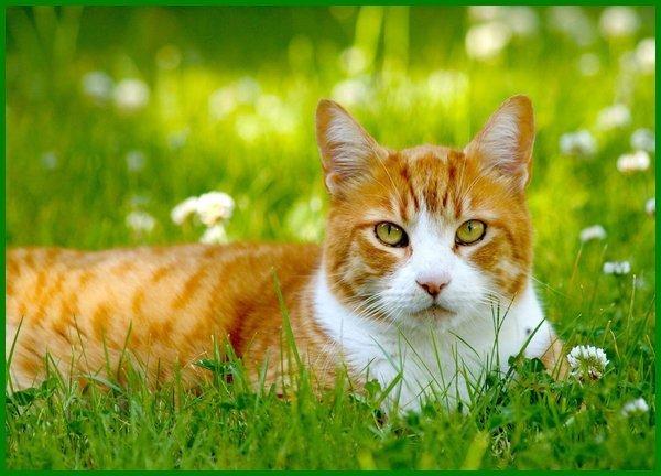 23 Nama Terbaik Untuk Kucing Oren Oranye Daftarhewan Com