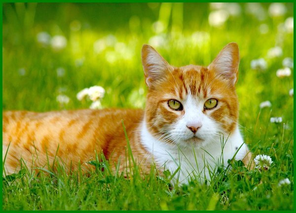 nama kucing oren jantan, nama kucing oren lucu, nama kucing oren putih, nama kucing oren cowok, nama2 kucing oren, nama anak kucing oren, nama nama kucing oren, nama kucing berwarna oranye, nama kucing yang berwarna oren, nama buat kucing oren, nama kucing betina warna oren, nama yang bagus untuk kucing oren, nama kucing orange nama untuk kucing oren, nama lucu untuk kucing oren, nama nama kucing warna oren, nama nama kucing jantan oren, nama kucing warna oren putih