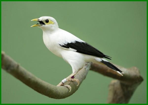 burung yang dilindungi beserta gambarnya, burung yang dilindungi 2020, burung yang dilindungi 2021, burung yang dilindungi 2022, burung khas papua yang dilindungi adalah, daftar burung yang dilindungi bksda 2022-2023-2024, daftar burung yang dilindungi beserta gambarnya, burung di indonesia yang dilindungi, gambar burung elang yang dilindungi, gambar burung yang dilindungi, burung yg dilindungi, burung yg di lindungi di indonesia