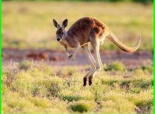 hewan apa saja yang bisa melompat, hewan apa saja yang bergerak dengan cara melompat, hewan apa yang melompat, nama hewan yang melompat, nama nama hewan yang bisa melompat, hewan melompat contohnya, hewan cepat melompat, hewan yang bergerak dengan melompat, hewan yang berjalan dengan melompat, hewan apa saja yang melompat, hewan yang suka melompat lompat, hewan yang bergerak secara melompat, hewan yang memiliki telinga besar dan suka melompat