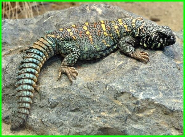 reptil herbivora, contoh hewan reptil herbivora, hewan reptil yg termasuk herbivora, reptil herbivora, hewan reptil apa aja, hewan-hewan reptil, contoh hewan reptil yang termasuk herbivora, 3 hewan reptil, 3 contoh hewan reptil, 5 hewan reptil, hewan yang termasuk reptilia