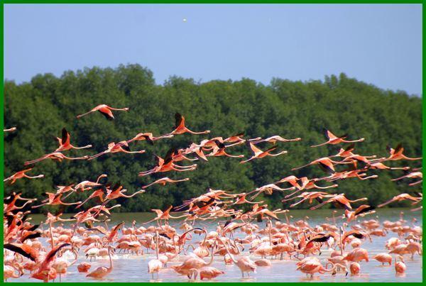 pengertian migrasi burung brainly, contoh burung migrasi, ciri ciri burung migrasi, migrasi burung flamingo, foto burung migrasi, fungsi burung migrasi, gambar burung migrasi, burung migrasi apa itu, migrasi burung pdf, penyebab burung migrasi, burung yang suka migrasi, burung yang bermigrasi