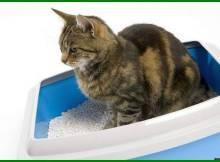pasir kucing wangi, pasir kucing yang bagus, pasir kucing terbaik, pasir kucing anti bau, pasir kucing aroma, pasir kucing adalah, pasir kucing bagus, pasir kucing bau, pasir kucing cat litter, pasir kucing cat sand, pasir eek kucing, fungsi pasir kucing, pasir kucing gumpal, pasir kucing gumpal terbaik, pasir kucing halus atau kasar