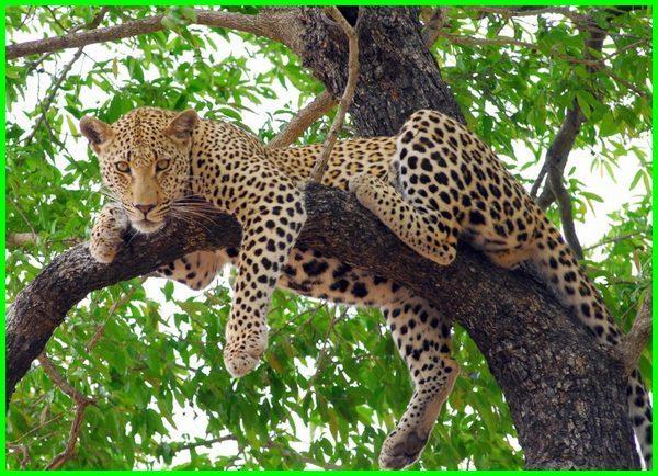 apa hewan yang hidup di pohon, nama hewan yang hidup di pohon, apa saja hewan yang hidup di pohon