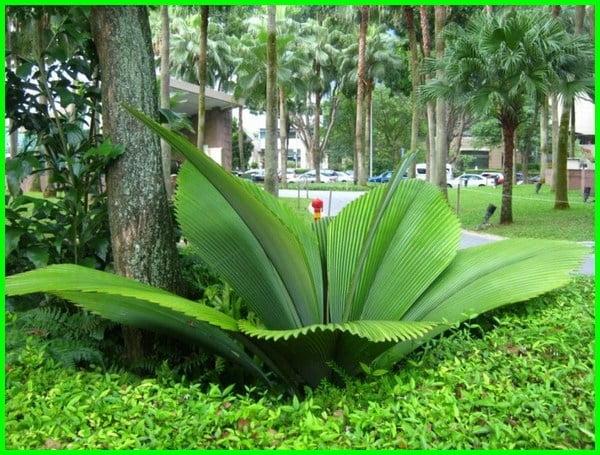 jenis flora fauna di indonesia, jenis flora dan fauna di indonesia, jenis flora di indonesia beserta gambarnya, gambar jenis flora di indonesia, jenis flora yg ada di indonesia, jenis jenis flora indonesia jenis flora di indonesia, jelaskan jenis flora indonesia, jelaskan jenis flora di indonesia, jenis flora khas indonesia