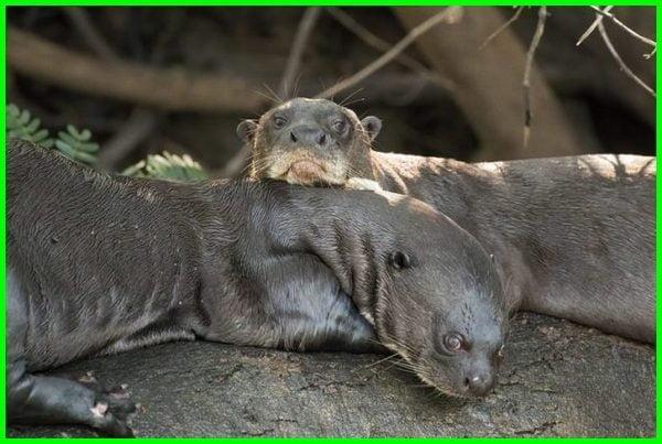 hewan yang setia pada pasangannya,hewan yang paling setia dengan pasangannya , binatang yang paling setia pada pasangannya, hewan hewan yang setia pada pasangannya, hewan yang paling setia dengan pasangan nya