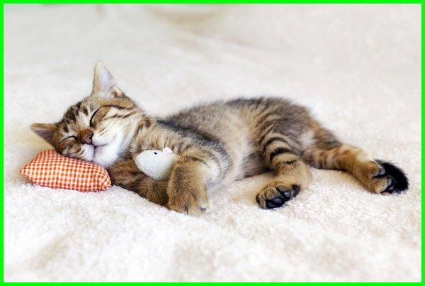 kucing tidur berapa jam, kucing tidur mulu, kucing tidur lucu, kucing tidur seharian, kucing tidur aja, kucing tidur bersama kita, kucing tidur brp jam ,kucing tidur bareng kita, kucing tidur berapa jam dalam sehari, kucing tidur dekat kita, fakta kucing tidur