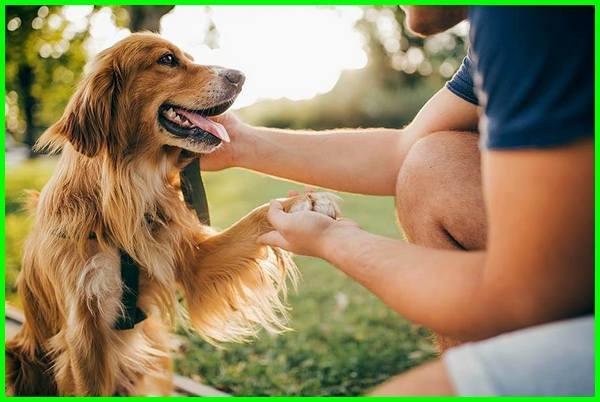 kenapa anjing lebih setia daripada kucing, kenapa anjing setia pada manusia, kenapa anjing hewan paling setia, kenapa anjing bisa setia mengapa anjing setia, anjing setia, kenapa anjing sangat setia, kenapa anjing itu setia, mengapa anjing setia kepada tuannya, mengapa anjing setia pada manusia, kenapa setiap memelihara anjing selalu mati