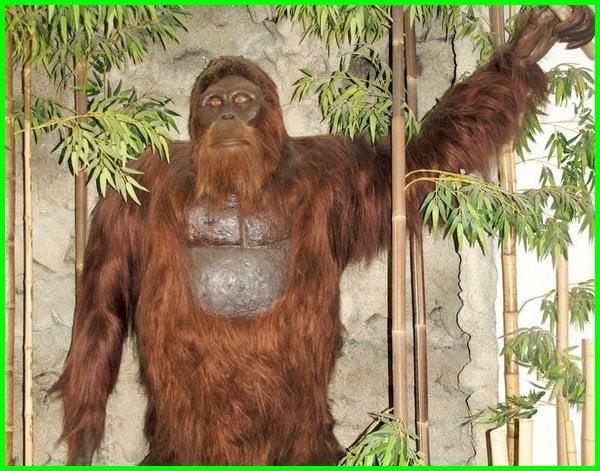 kera purba terbesar di dunia, monyet terbesar sepanjang sejarah, monyet yang terbesar di dunia, monyet terbesar dunia, jenis monyet terbesar
