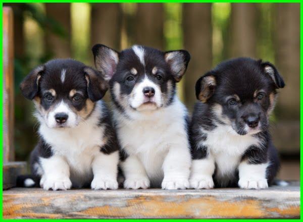 nama anak anjing jantan hitam, nama anak anjing jantan yang bagus, nama anak anjing jantan dan artinya, nama anjing jantan awalan c, nama anak anjing jantan korea, apa nama anjing jantan, nama anjing jantan beserta artinya, nama anjing jantan bahasa korea, nama anjing jantan coklat, nama anjing jantan dalam bahasa jepang, nama anak anjing laki, nama anak anjing laki laki, nama nama anak anjing jantan, nama anak anjing perempuan, nama anjing jantan golden, nama anjing jantan hitam, nama anjing jantan indonesia