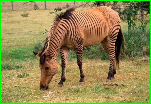 nama hewan a-z bahasa inggris, hewan berawalan huruf a-z, hewan awalan huruf a-z, nama hewan menurut abjad a-z, nama hewan a sampai z bahasa inggris, 100 contoh klasifikasi hewan a-z lengkap, nama hewan dari a-z bahasa inggris, hewan dari huruf a sampai z dalam bahasa inggris