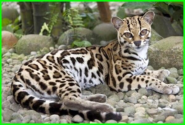 nama hewan bahasa inggris a-z, nama hewan bahasa inggris beserta gambarnya, 20 nama hewan dalam bahasa inggris beserta artinya, nama hewan dalam bahasa inggris dan cara pengucapannya, contoh nama hewan dalam bahasa inggris, nama hewan dengan bahasa inggris, nama bahasa inggris binatang