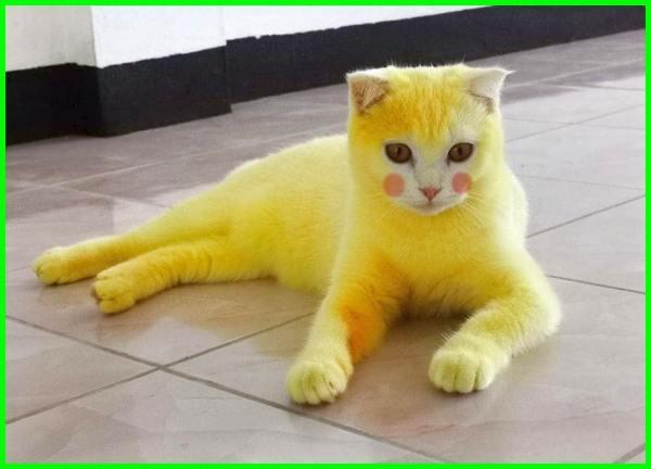 nama kucing kuning betina, nama kucing kuning yang bagus, nama kucing warna kuning, nama kucing warna kuning putih, nama kucing jantan kuning putih, nama kucing berwarna kuning putih, nama kartun kucing kuning, nama kucing jantan warna kuning, nama kucing kuning putih, nama anak kucing warna kuning, nama kucing untuk warna kuning, nama nama kucing warna kuning, nama kucing berwarna kuning, nama kucing bulu kuning, nama kucing jantan bulu kuning