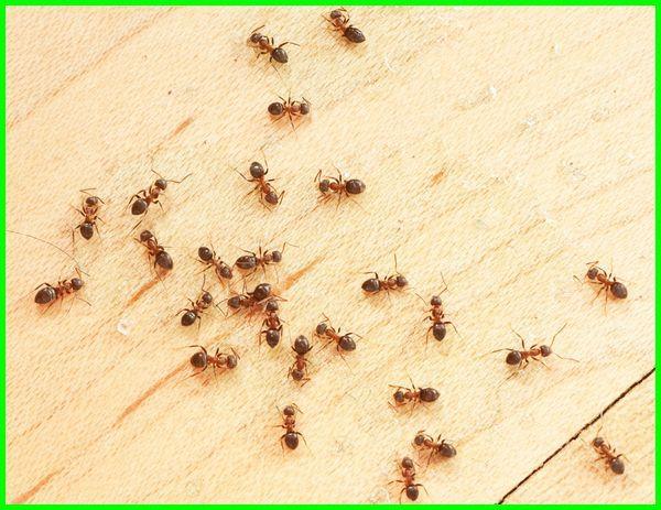 cara mengusir semut merah kecil di rumah, cara menghilangkan semut, cara menghilangkan semut di rumah, cara menghilangkan semut merah, cara menghilangkan semut merah di rumah, cara menghilangkan semut pada tanaman, cara menghilangkan semut di beras, cara menghilangkan semut di mobil, cara menghilangkan semut di keramik, cara menghilangkan semut hitam, cara menghilangkan semut di tv led, cara menghilangkan semut api, cara menghilangkan semut di kamar, cara menghilangkan semut di tanaman, cara menghilangkan semut gatal, cara menghilangkan semut di gula