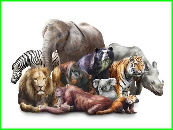 mamalia adalah, gambar mamalia, hewanmamalia, mamalia adalah, mamalia laut, contoh mamalia, mamalia terbesar di dunia, pengertian mamalia, jenis mamalia, mamalia