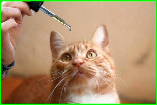 minyak ikan kucing, minyak ikan untuk kucing di apotik, minyak ikan buat kucing, fish oil untuk kucing, minyak ikan untuk kitten, minyak ikan yang bagus untuk kucing, minyak ikan untuk kucing, fungsi minyak ikan untuk kucing, minyak ikan untuk kucing di apotik, kegunaan minyak ikan untuk kucing, efek samping minyak ikan untuk kucing