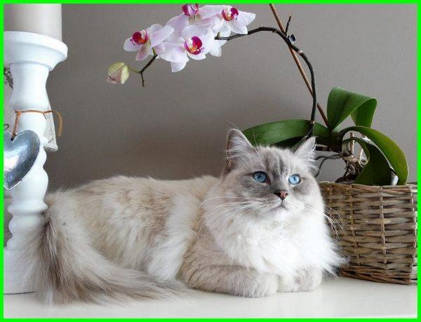 nama nama kucing betina, nama kucing betina lucu, nama kucing betina belang 3, nama kucing betina yang bagus, nama kucing betina yg bagus, nama kucing betina korea, nama kucing betina jepang, nama kucing betina indonesia, nama kucing betina berdasarkan warna, nama kucing putih betina, nama yang cocok untuk kucing betina, nama kucing betina islami