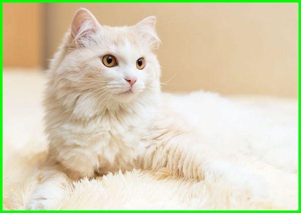 nama kucing perempuan, nama nama kucing betina, nama nama kucing perempuan, nama untuk kucing perempuan, nama kucing perempuan yang bagus, nama kucing lucu betina, nama kucing betina yang bagus, nama untuk kucing betina, nama anak kucing betina, nama2 kucing betina, nama anak kucing perempuan, nama buat kucing betina, nama kucing lucu perempuan, nama kucing perempuan yang lucu, nama yang bagus untuk kucing betina