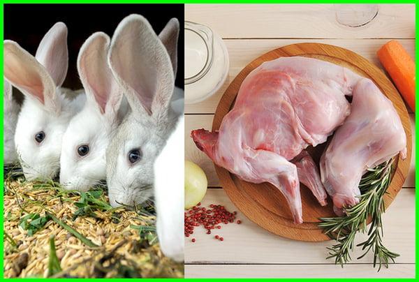 cara memasarkan kelinci, pemasaran kelinci pedaging, pemasaran kelinci, pemasaran ternak kelinci, pemasaran kelinci pedaging, pemasaran kelinci pedaging jawa barat, pemasaran kelinci di jawa tengah, cara pemasaran kelinci pedaging, pemasaran daging kelinci, cara memasarkan kelinci cara pemasaran kelinci, cara menjual kelinci rex, cara pemasaran ternak kelinci, cara menjual kelinci online, sebutkan cara yang ditempuh untuk memasarkan kelinci hias, cara memasarkan kelinci pedaging