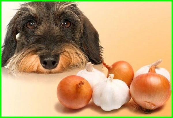 makanan dilarang untuk anjing, makanan yg tidak boleh untuk anjing, makanan yang tidak boleh untuk anjing, makanan yang dilarang untuk anjing, makanan yg dilarang untuk anjing, makanan yang tidak boleh diberikan pada anjing, makanan yg dilarang untuk anjing, makanan yang dilarang untuk anjing