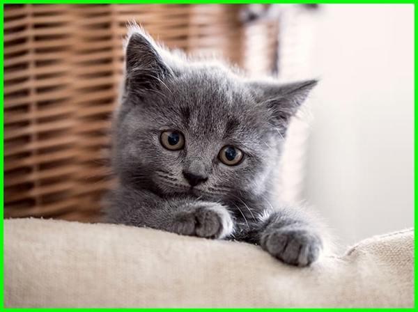 arti mimpi anak kucing, mimpi melihat anak kucing, mimpi melihat anak kucing banyak, arti mimpi melihat anak kucing baru lahir, arti mimpi melihat anak kucing, mimpi melihat banyak anak kucing, mimpi dapat anak kucing, mimpi banyak anak kucing, mimpi anak kucing banyak,mimpi melahirkan anak kucing, mimpi dikejar anak kucing, mimpi anak kucing, arti mimpi anak kucing