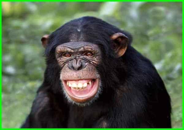 hewan terpintar di dunia, hewan yang paling pintar di dunia adalah, hewan paling pintar di dunia, binatang pintar, hewan yang pintar, hewan yg pintar, hewan terpintar